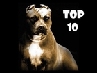 TOP 10 Strong & Beautiful Dogs
