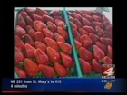 Poteet Strawberry Festival and Wheeler Farms
